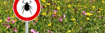 Borelioza – co farmaceuta powinien wiedzieć?