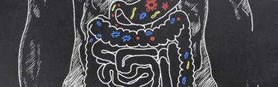 Jaką rolę spełnia mikroflora bakteryjna?