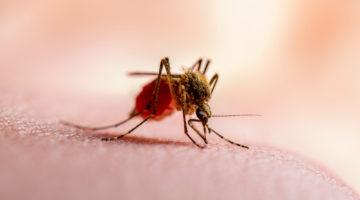 Malaria - występowanie, objawy i leczenie