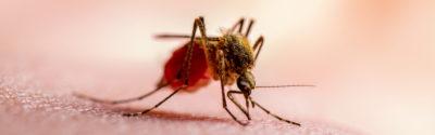 Malaria – występowanie, objawy i leczenie